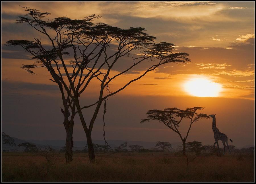 Afrika'nın vahşi hayvanları!