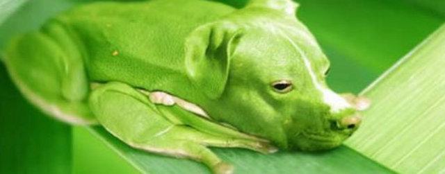 Photoshop İcadı Hayvanlar