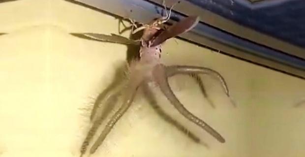 Ürkütücü yaratık