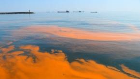 Marmara Denizi'nde şaşırtan görüntüler