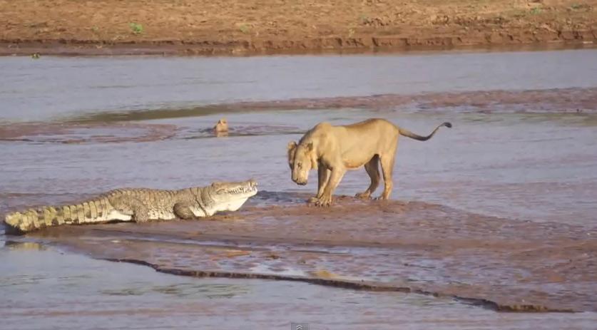 Ölü Fil Eti için Amansız Kavga