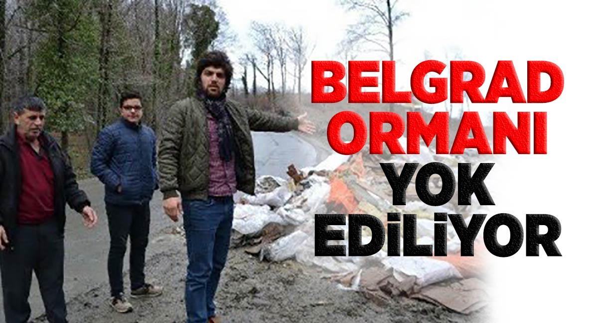 Belgrad Ormanı yok ediliyor