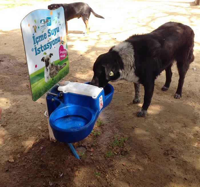 Sokak hayvanlarına 140 su istasyonu