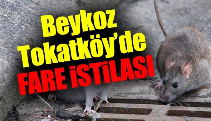 Beykoz Tokatköy'de fare istilası