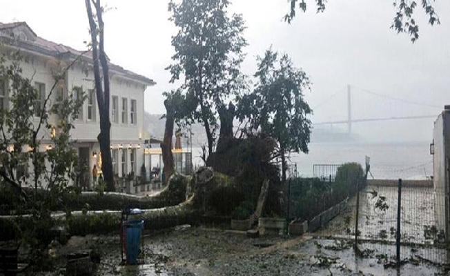 Fırtınada devrilen ağaçların yerine 4.236 ağaç dikildi