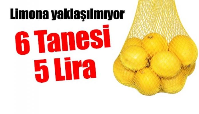 Limona yaklaşılmıyor. 6 Tanesi 5 Lira