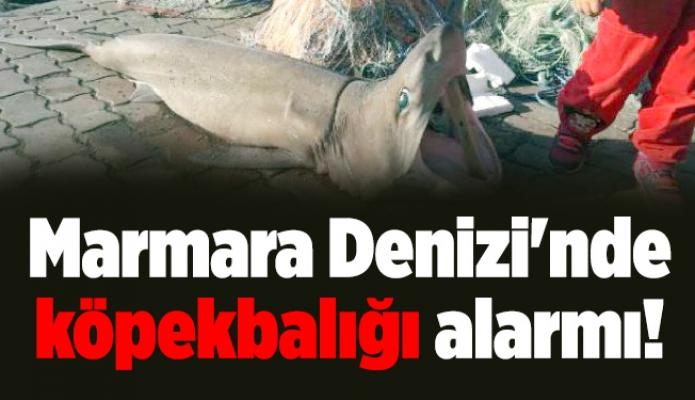 Marmara Denizi'nde köpekbalığı alarmı!