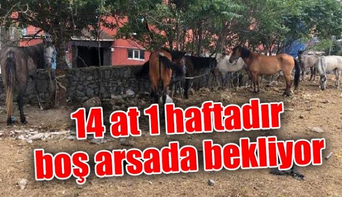 14 at 1 haftadır boş arsada bekliyor