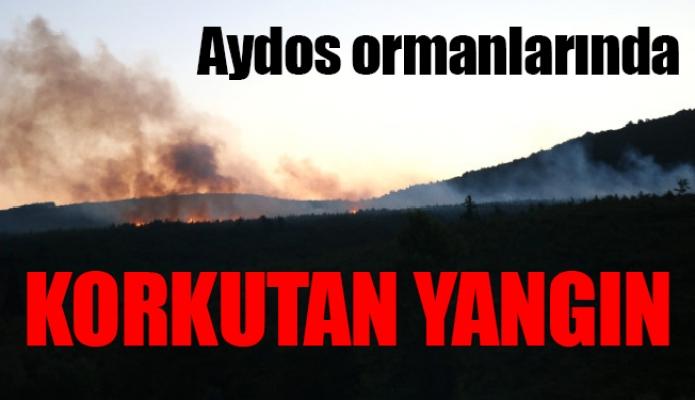 Aydos ormanlarında korkutan yangın