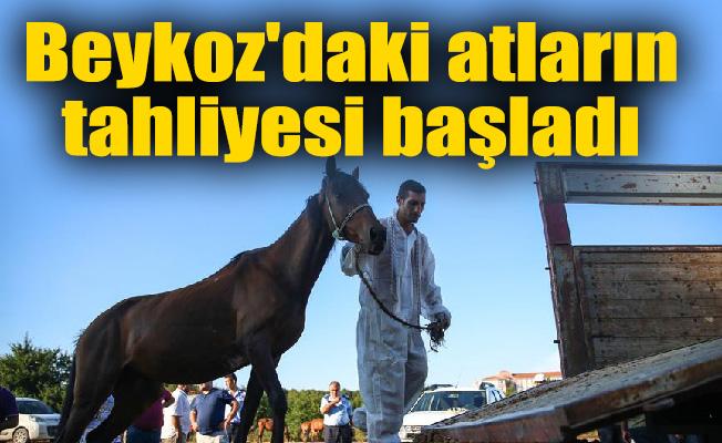 Beykoz'daki atların tahliyesi başladı