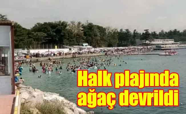 Halk plajında ağaç devrildi: 3 yaralı