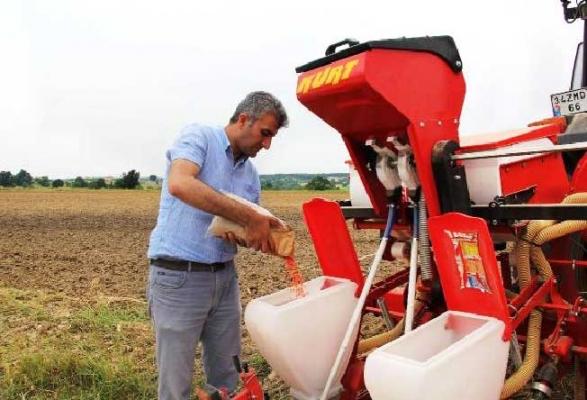 Beykoz'da ilk mısır hasadı yapıldı