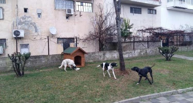 Ümraniye'de bu kış sokak hayvanları için daha sıcak geçecek