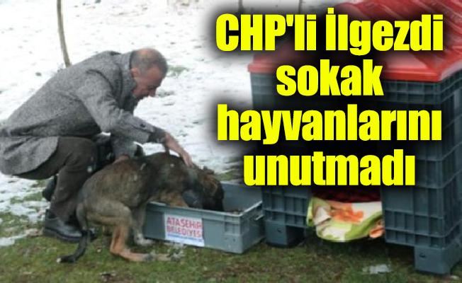 CHP'li Battal İlgezdi sokak hayvanlarını unutmadı
