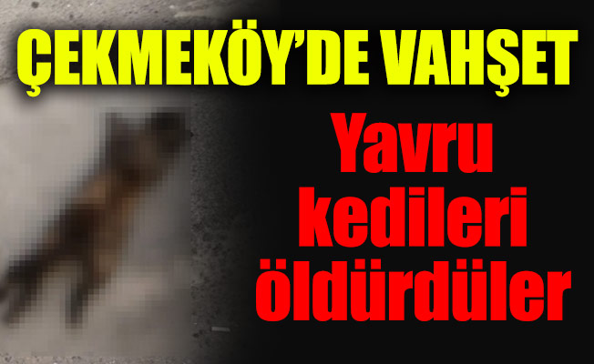 Çekmeköy'de vahşet.Yavru kedileri öldürdüler