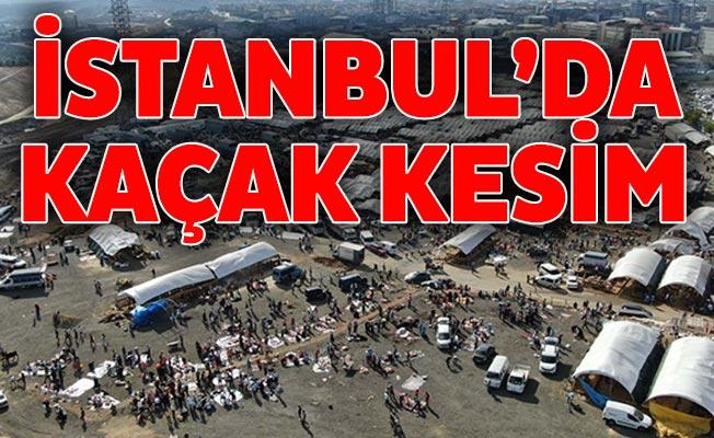 İstanbul'da Kaçak kesim