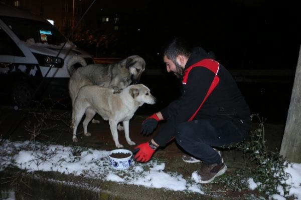 Kartal Belediyesi Soğuk Kış Günlerinde de Sokak Hayvanlarının Yanında