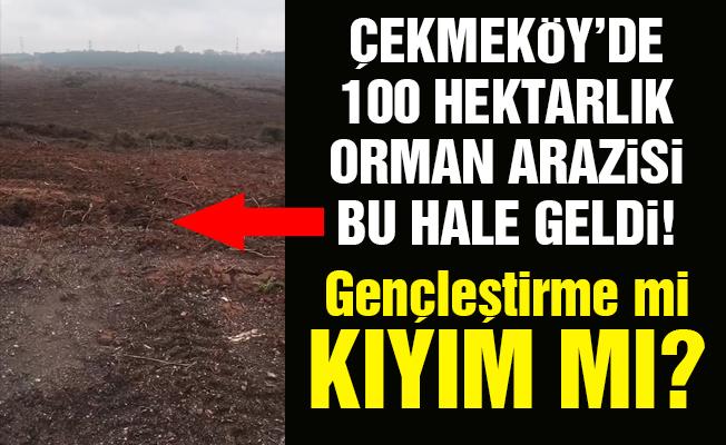 Çekmeköy'de 100 hektarlık orman arazisi bu hale geldi! Gençleştirme mi kıyım mı?