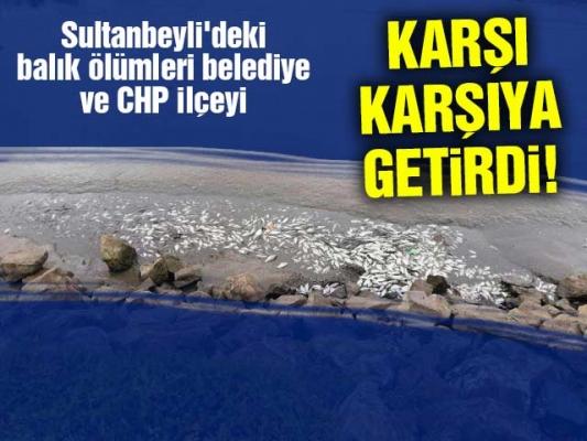 Sultanbeyli'deki balık ölümleri belediye ve CHP ilçeyi karşı karşıya getirdi!