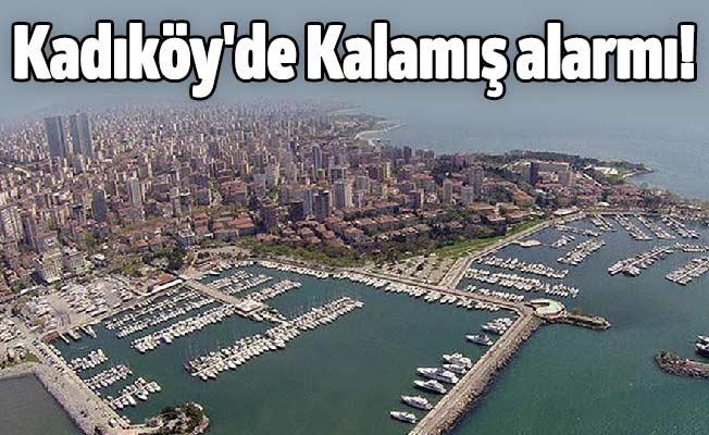 Kadıköy'de Kalamış alarmı!