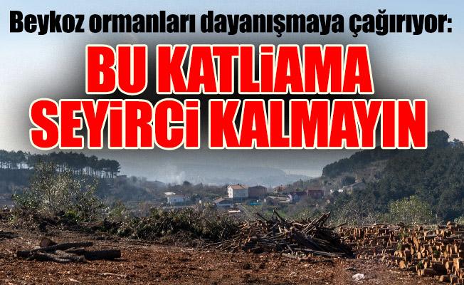 Beykoz ormanları dayanışmaya çağırıyor:Bu katliama seyirci kalmayın