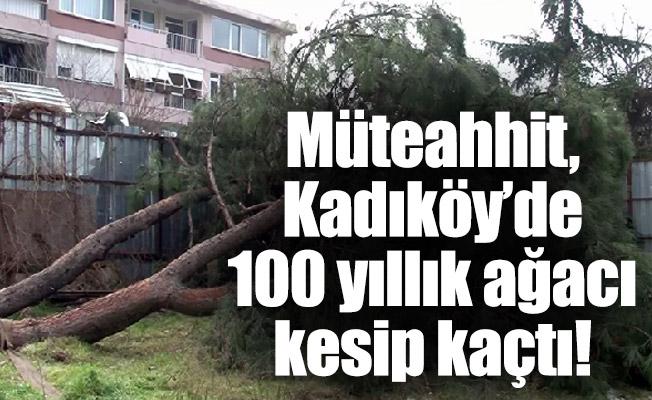 Müteahhit, Kadıköy'de 100 yıllık ağacı kesip kaçtı!