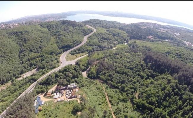 Beykoz'daki Ortaklık Orman Arazisini Yok Edecek!