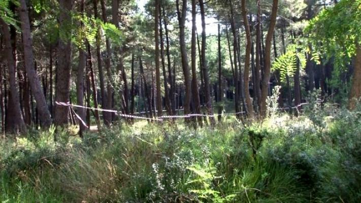 İstanbul'da Ormanlık Alanlarda Şeritli Önlem