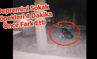 Depremini Sokak Köpekleri 4 Dakika Önce Fark Etti