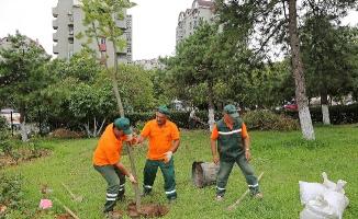 Devrilen ağaçların yerlerine yenileri dikiliyor