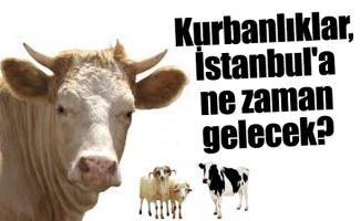 Kurbanlıklar, İstanbul'a ne zaman gelecek?