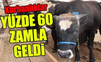 Kurbanlıklar yüzde 60 zamla İstanbul'da!