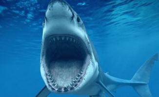 Marmara Denizi köpek balığı kaynıyor