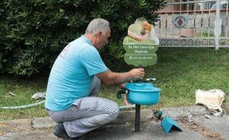 Ümraniye'de sokak hayvanları içinpratik çözüm
