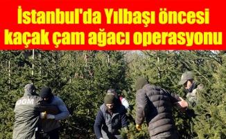 İstanbul'da Yılbaşı öncesikaçak çam ağacı operasyonu