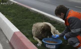 Sokak hayvanlarına 16 noktada beslenme desteği