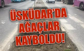 ÜSKÜDAR'DA AĞAÇLAR KAYBOLDU!