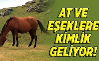At ve eşeklere kimlik geliyor!