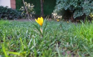İstanbulensis Çiçeği Sultanbeyli'yi Selamladı