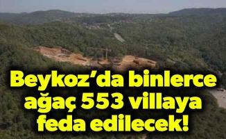 Beykoz'da binlerce ağaç553 villaya feda edilecek!
