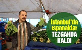 İstanbul'da ıspanaklar tezgahda kaldı