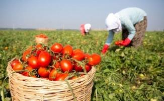 Beykozlu Çiftçilere Alım Garantili Üreticilik Müjdesi