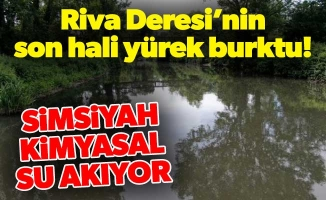 Riva Deresi'nin son hali yürek burktu!