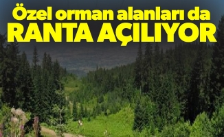 """Gürer: """"Özel orman alanları da ranta açılıyor"""""""