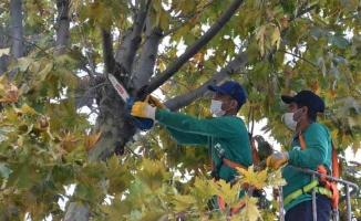 Ağaç budama mevsimi başladı