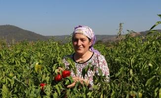 Kent Tarımı Kadın Çiftçilerle Kalkınıyor