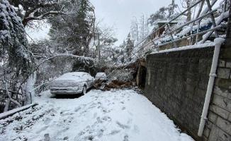 Kartal'da Devrilen Ağaca Müdahale