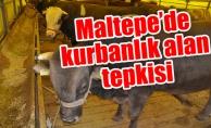 Maltepe'de kurbanlık alan tepkisi