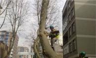 Ağaçlar Neden ve Ne Zaman Budanır?