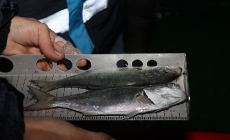 Balık Tezgahları Denetleniyor